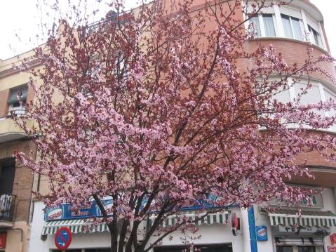 las flores no siempre anuncian la primavera
