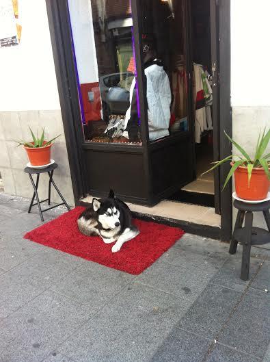 perrito bueno y guapo
