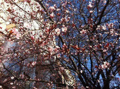 Primavera en Monte Igueldo