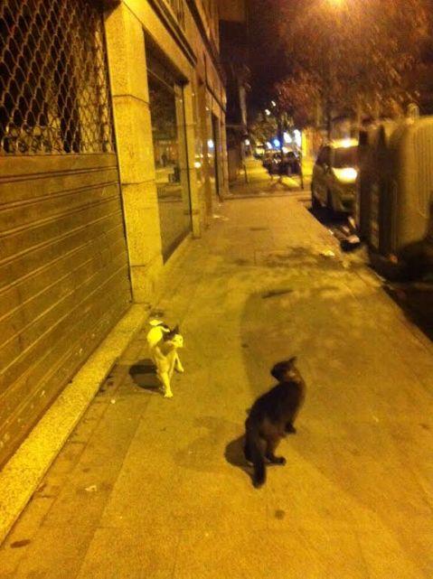 Dos gatos se retan en la calle Monte Igueldo a las 11 de la noche