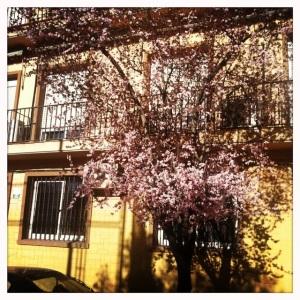 Las flores tapan las fachadas